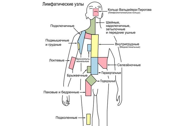 Основные группы лимфоузлов